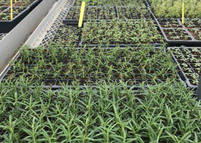 GreenhouseGrowing