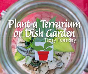 Plant a Terrarium