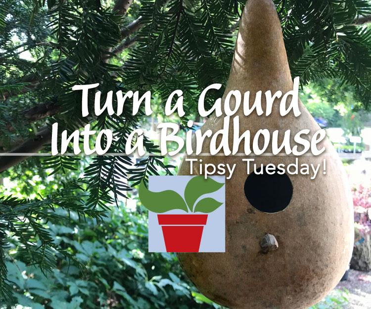 Turn a Birdhouse Gourd into a Birdhouse