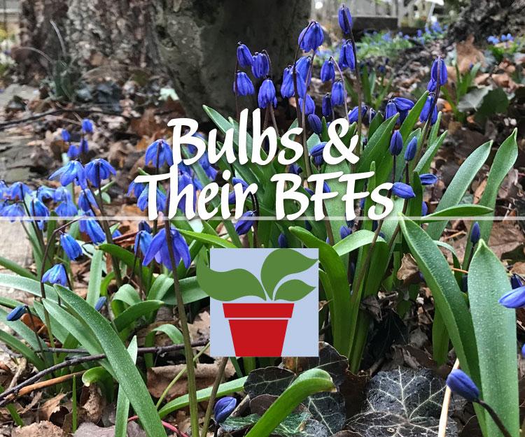 Bulbs & Their BFFs