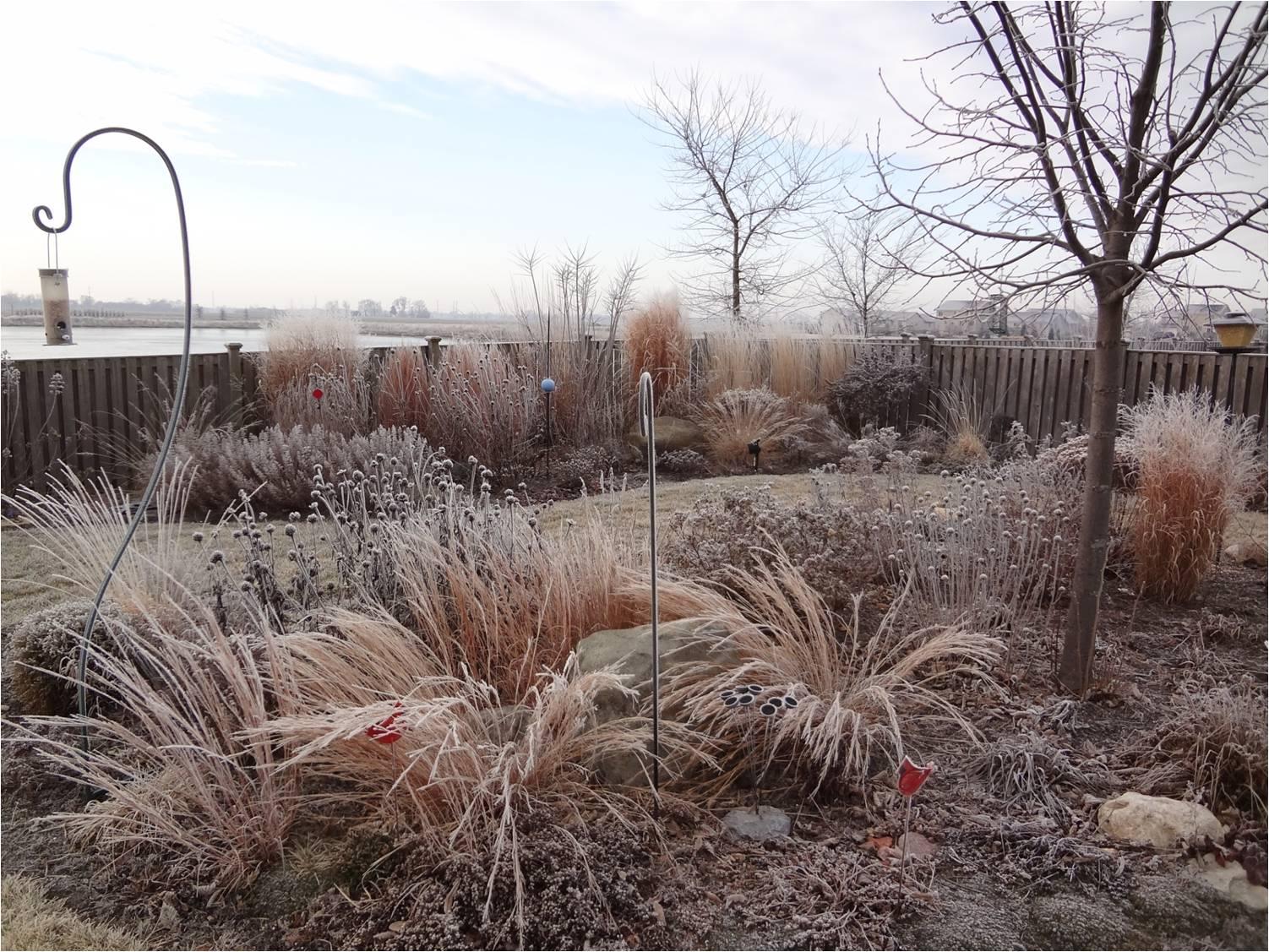Perennial Grass Brings  Winter Interest