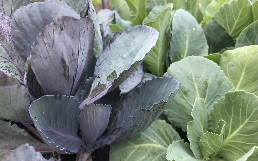 Growing Gourmet in a Cooler Climate