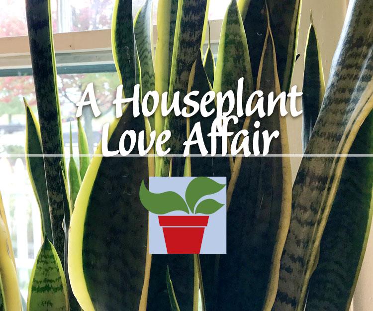 A Houseplant Love Affair