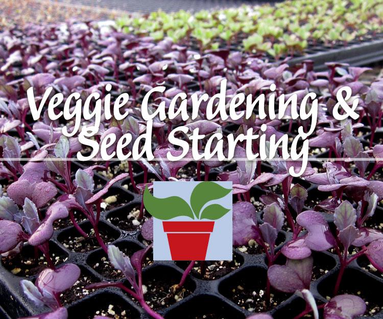 Veggie Gardening & Seed Starting