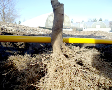 2020 Bare Root Tree Availability