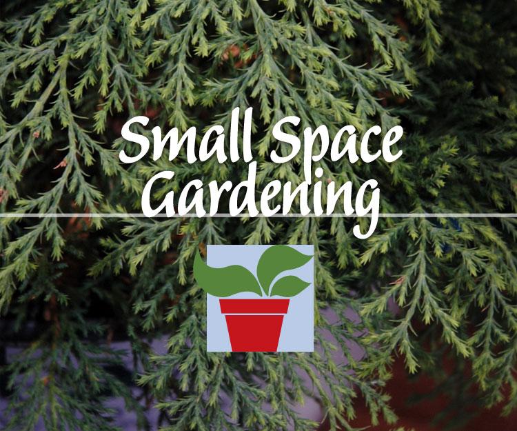 Postponed: Small Space Gardening – Dwarf Shrubs