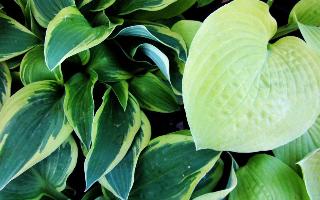 Shade Lovin' Plants
