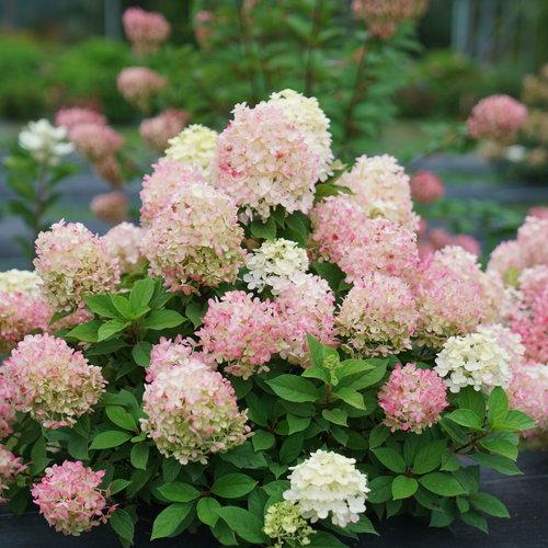 New & Noteworthy Plants
