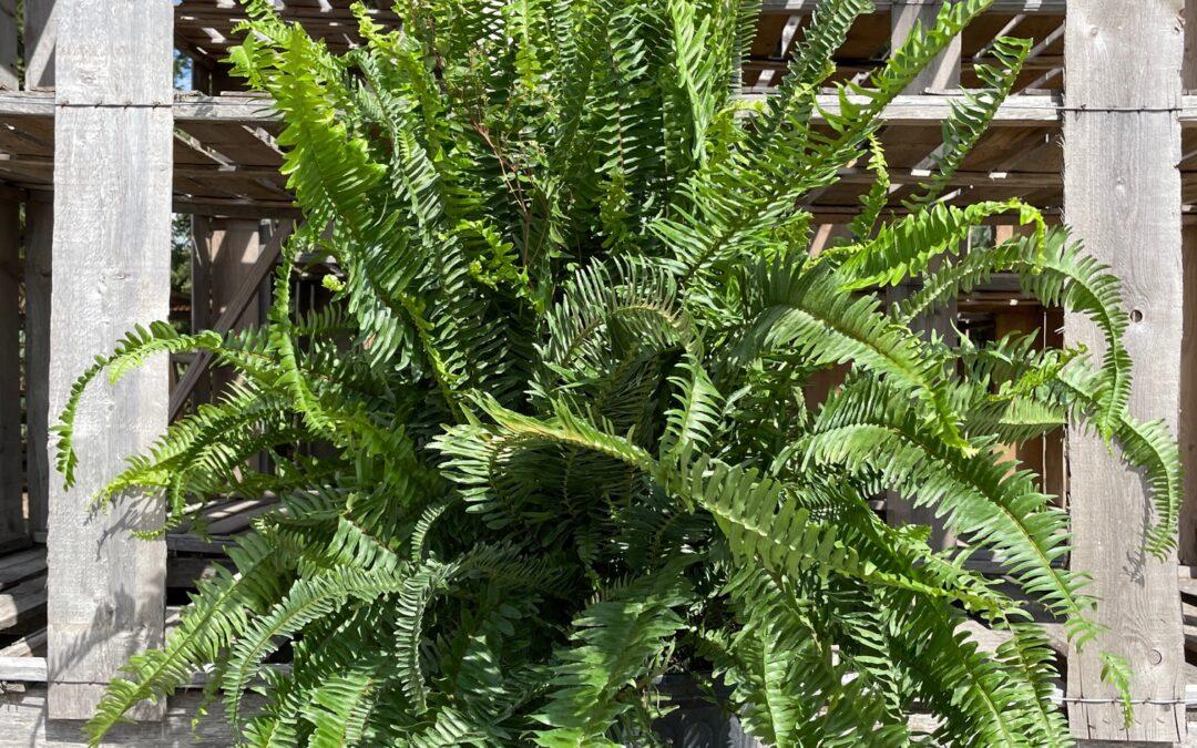 Transition Plants Indoors