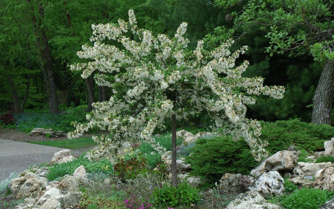 Trees & Shrubs for Small Spaces