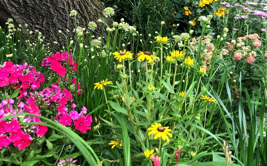 Create a Cutting Garden